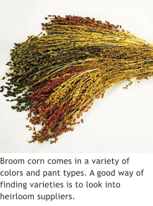 Broom corn comes in a variety of colors and pant types. A good way of finding varieties is to look into heirloom suppliers.